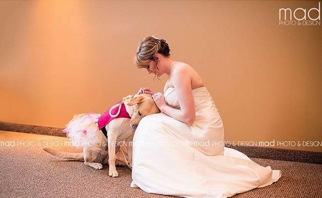 Service Dog Comforts Bride On Wedding Day