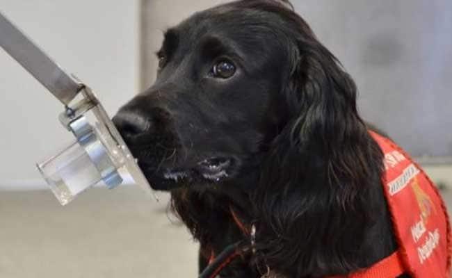 जब खोजी कुत्ते की जगह SHO ने अपने पालतू कुत्ते 'टॉमी' को काम पर लगाया