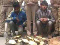 Over 200 Turtles Rescued From Wildlife Smugglers In Uttarakhand