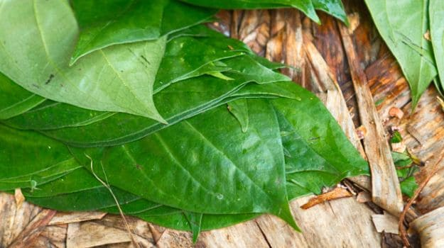 Indian Scientists Unlock the Health Benefits of Betel Leaf