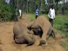 Elephant Dies Trying To Free Her Calf From Illegal Electric Fence In Vellore