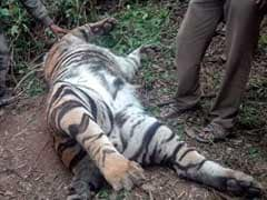 Tiger Killed In Tamil Nadu's Kodaikanal May Have Been Poisoned