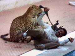 Bengaluru Leopard That Entered School Has Now Escaped From Zoo