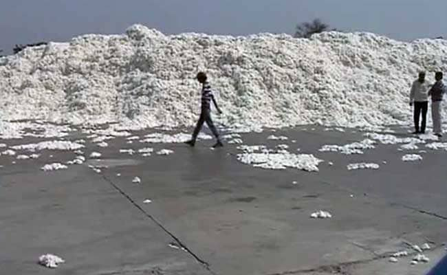 To Profit From Domestic Market, Indian Cotton Exporters Default On Export Shipments