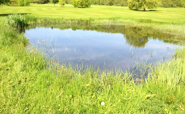 Small Ponds Emit Huge Share Of Greenhouse Gases: Study