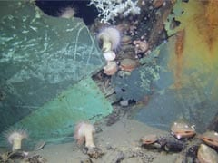 Amazing New Video Shows Deepwater Shipwrecks Corroded By BP Oil Spill