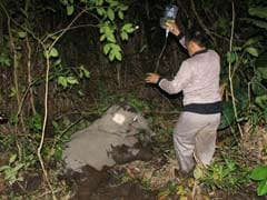 Sumatran Elephant Found With Leg Almost Severed By Rope