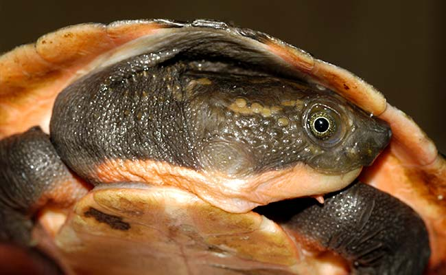 Uttarakhand Okays 500-Acre Turtle Sanctuary In Rishikesh