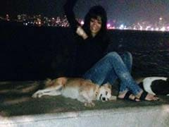 Mumbai's 'Vigilante Dog Squad' is All Kinds of Awesome