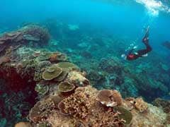 US Climate Change Campaigner Dies Snorkelling At Great Barrier Reef