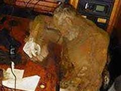 Mummified Body Of Man Found On A Drifting Yacht, Hunched On A Table