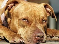 OMG: जिस कुत्ते को पुलिस ने ठुकराया उसे गर्वनर ने अपनाया