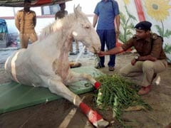 Shaktiman The Horse Shows 'Good Sign of Recovery'