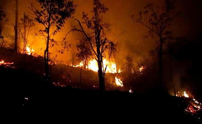 1 Arrested For Forest Fires Around Kodaikanal In Tamil Nadu