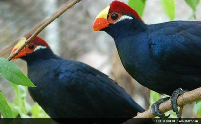Now, See Animals, Birds Of Kolkata Zoo Live From Home