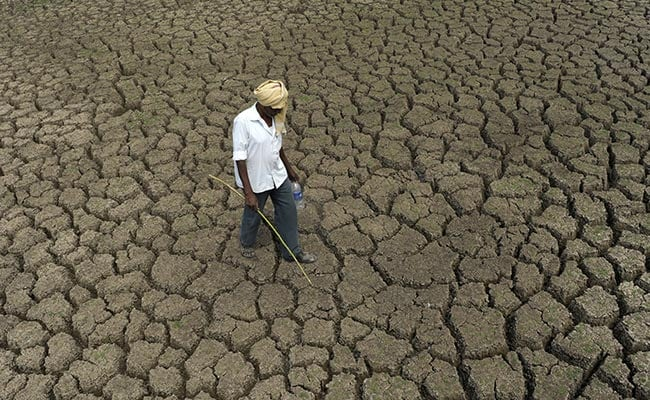 More Than 1,000 Villages In 4 Districts Of Rajasthan Affected By Drought