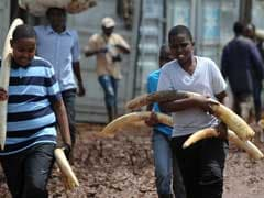 Kenya Torches Huge Elephant Tusk Stockpile