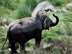 Elephant Calf Electrocuted In Tamil Nadu