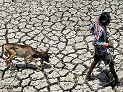 Gujarat Reeling Under Severe Heat; 'Orange' Alert Issued By Ahmedabad Municipal Corporation