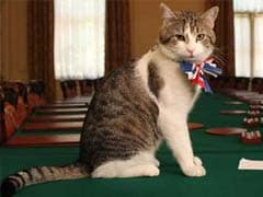 At Last, Some Stability: Larry The Cat Will Remain At 10 Downing Street