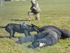 British Army Dogs Get Their Own Personal Protection Equipment