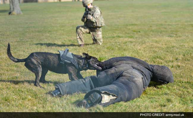 British Army Dogs Get Their Own