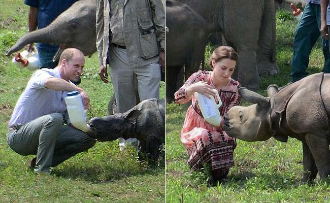 'Shocked By What Has Happened': Prince William, Kate Middleton On Kaziranga Floods