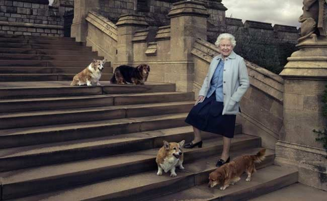 Queen Elizabeth II Loses Her Last Corgi, Willow, Marking The End Of A Scrappy Canine Dynasty