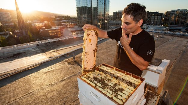 Hive Mentality: The Buzz About Local, Artisanal Honey