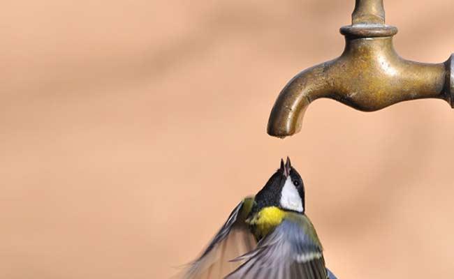 Delhi Government Plans Drinking Water Arrangements For Birds, Animals This Summer