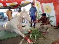 Shaktiman Fought Till The End, Says The Brave Horse's Grieving Caretaker