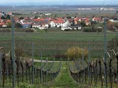 This German Village Wants To Be Known For Wine. Instead, It's Trump - And 'Drumpf.'