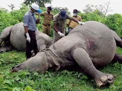 Lightning Kills 2 Rhinos In West Bengal's Gorumara National Park