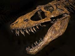 This Dinosaur Had a Heartbreaking Life. Now She's Famous - And an Inspiration.