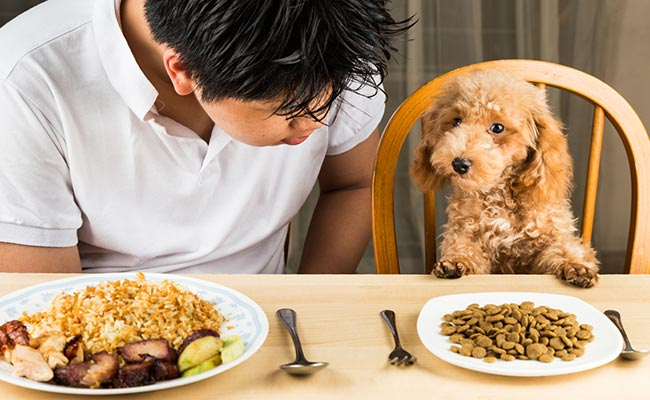 What Is The Best Dog Food For Dogs With Gas