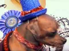 'He Really Makes Up For It With His Personality': World's Ugliest Dog Wins Hero Award