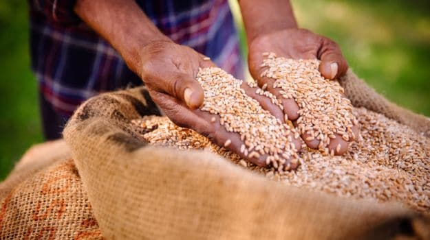 Punjab, Haryana Procure 174 Lakh Tonnes of Wheat