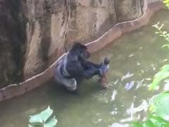 No Charges Against Mother In Cincinnati Gorilla Case: Prosecutor