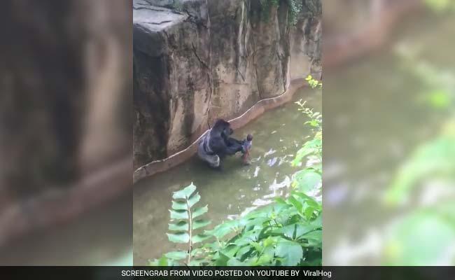 No Charges Against Mother In Cincinnati Gorilla Case: Prosecutor