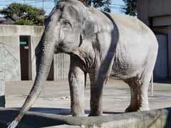 Japan's Oldest Elephant 'Hanako' Dies At 69