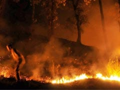 Centre Assures Himachal Government Of All Help In Dousing Forest Fire