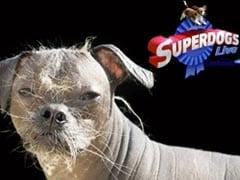 'World's Ugliest Dog' Wins Hero Award In UK