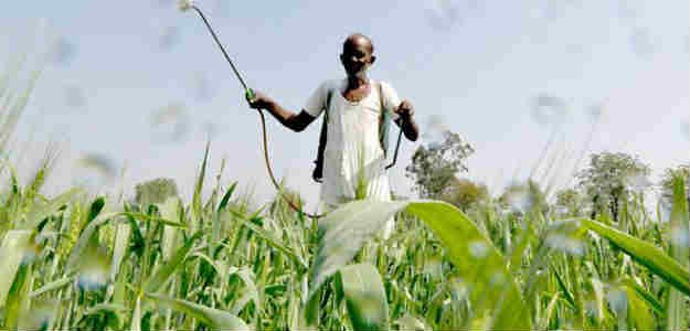 Cut Usage Of Chemical Fertilsers, Pesticides, PM Modi Tells Farmers