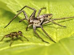 Spider Venom May Prevent Damage Caused by Strokes
