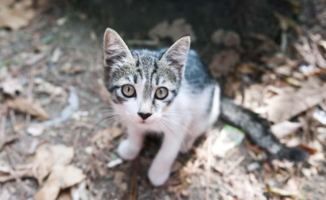 कहीं आपकी पालतू बिल्ली तो ऐसा नहीं करतीं? इस परिवार ने छुपकर देखा तो दंग रह गए