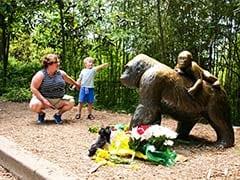 Prosecutor To Announce Decision In Cincinnati Zoo Gorilla Case