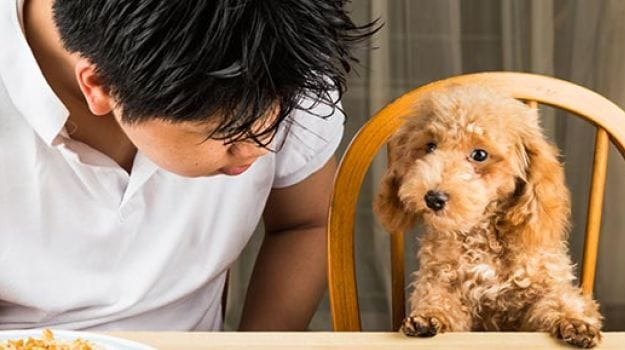 Dogs Detect Diabetes by Sniffing Warning Signs