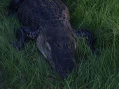Florida Man Shoots Gator. Then The Gator Bites His Son.