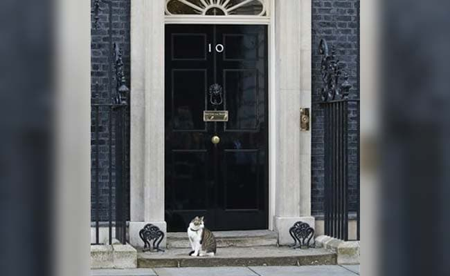 As World Discusses Brexit, Twitter Is Obsessing Over Larry The Cat