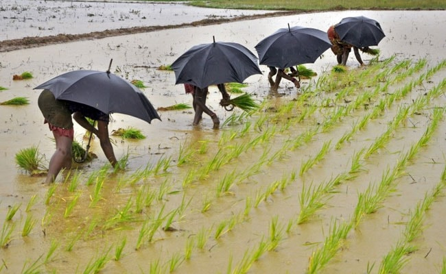 Heavy Rains In UP Has Boosted Kharif Crop Sowing: Agriculture Minister